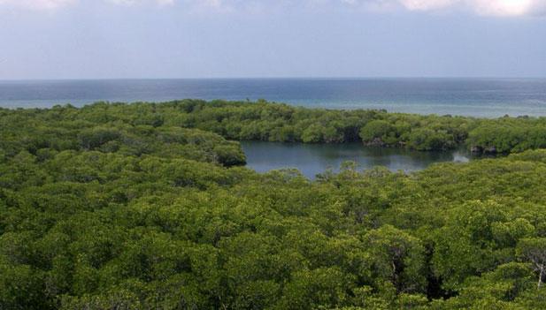 mangrove bird habitat