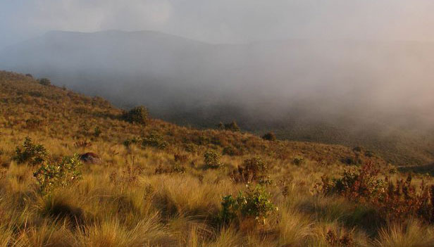 paramo grassland bird habitat