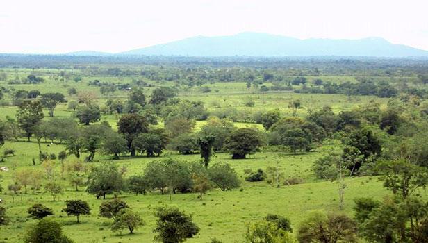 pasture and agricultural land - Peru