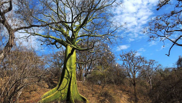 decidous forest habitat Peru birds