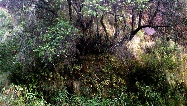 humid_scrub_bird habitat Peru