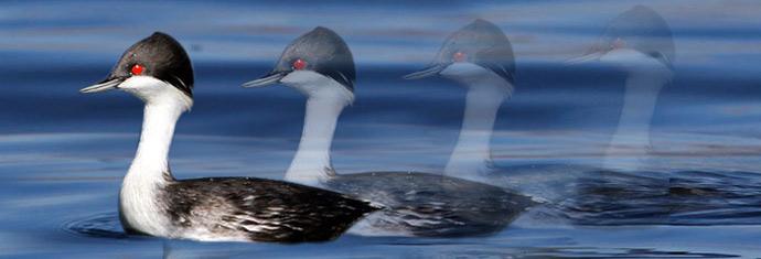 endangered birds Peru