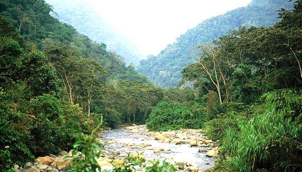 montane forest bird habitat Peru