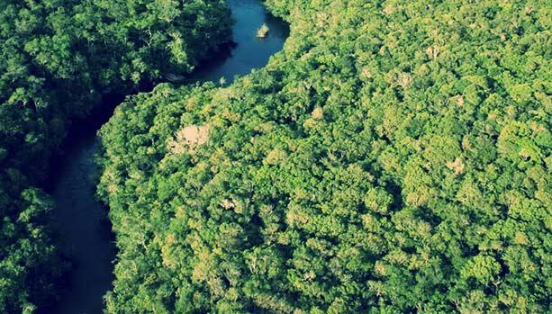treefall gaps_bird habitat Peru