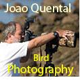 Joao Quental
