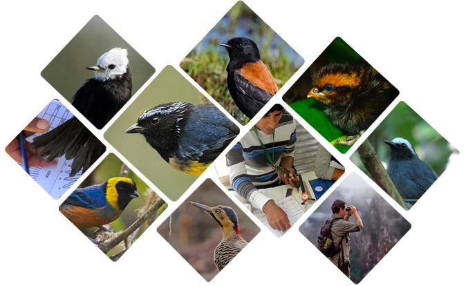 peruaves -birds of Peru