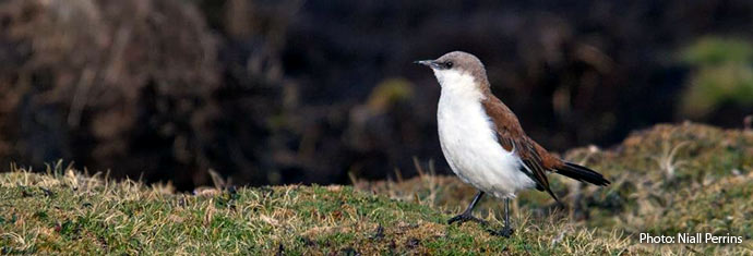 threatened and endangered birds of Peru
