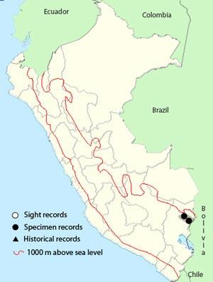 hooded_mountain toucan