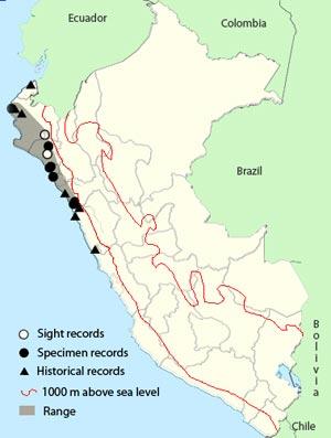 peruvian_plantcutter