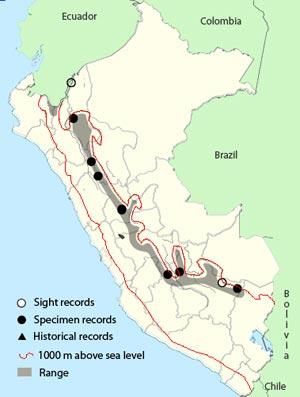 greater scythebill