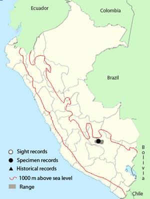 vilcabamba tapaculo
