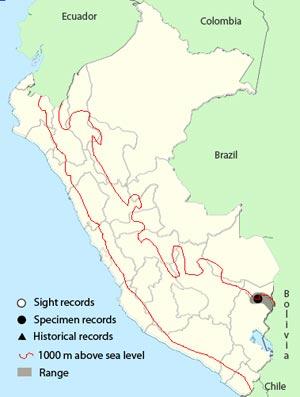 upland antshrike