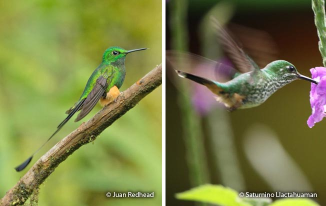 booted_racket-tail