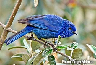 bird sounds of peru