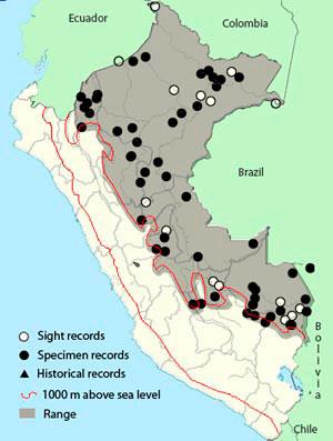 Amazonian-grosbeak_map