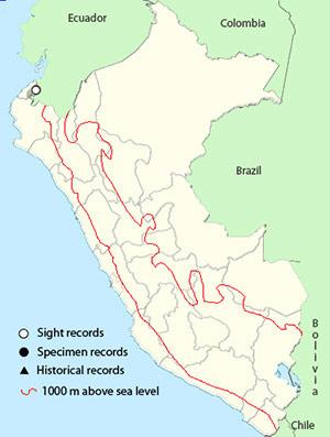 choco_toucan_map