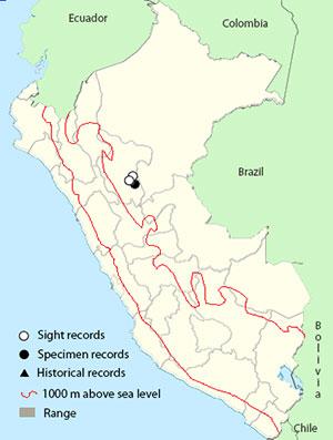 cordillera-azul-antbird_map