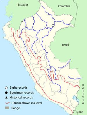 tropical_mockingbird_map