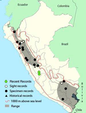 white-tailed_shrike-tyrant_map