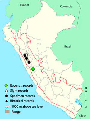 ancash-tapaculo-range map