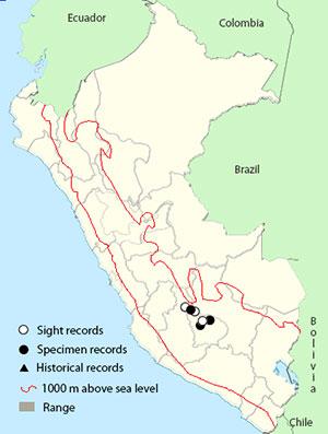 map Ampay Tapaculo