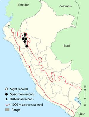 utcubamba tapaculo map